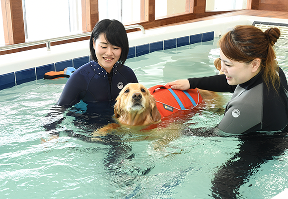 A resort both people and their beloved dogs can enjoy(Regina Resort Kyukaruizawa shown in the picture)